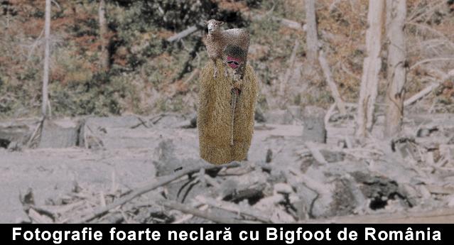Bigfoot de Romania nestire
