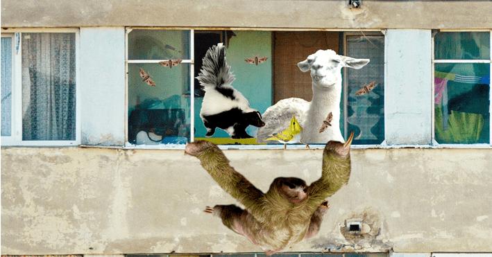 animale companie bloc nestire